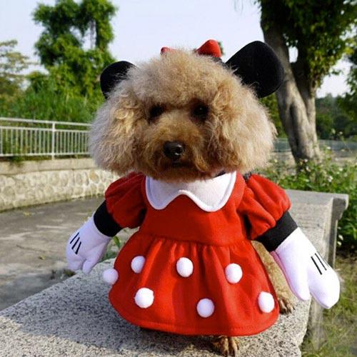 Disfraz para mascotas